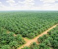 Thumb_bumitama_article_source_from_bumitama_agri_corporate_website